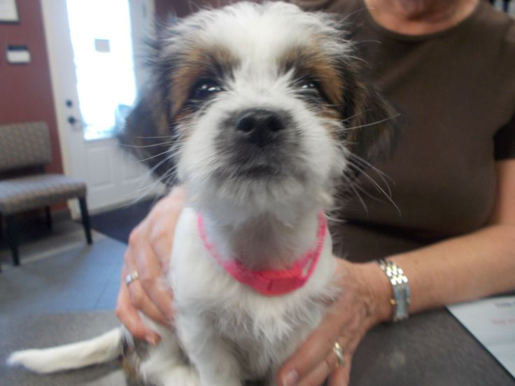 Benji @ Lockerby Animal Hospital on June 4, 2015