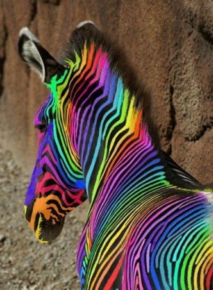Colorful Zebra Print Nail Art Tutorial: 170 Best Rainbow By Antoni Azocar Images On Pinterest