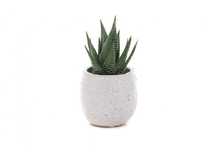 Aloe Pick Extra Mini Tub | Super A-Mart #superamartpin2win Superamartpin2win