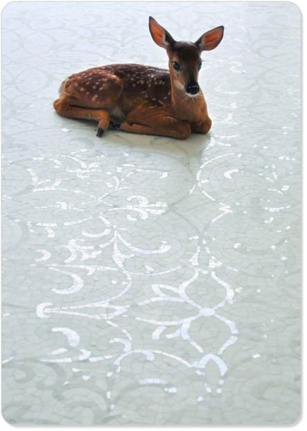 17 best images about deer elk moose caribou on - Bambi on ice images ...