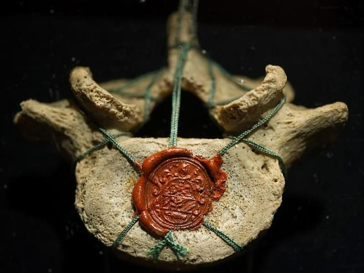 """An original lumbar vertebra of Galieo Galileo (1564-1642) in the exhibition """"The Medici - People, Power and Passion""""."""