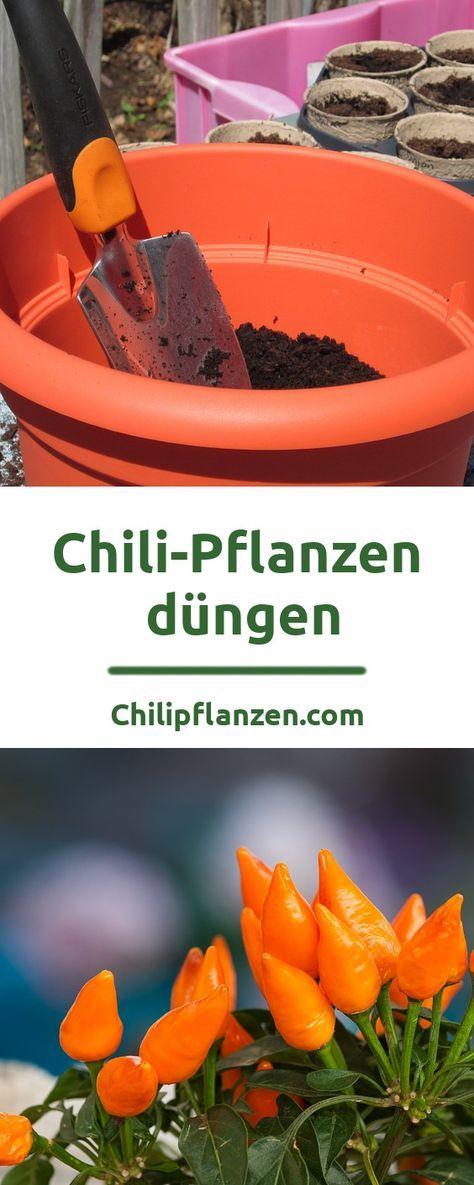 Dünger für Chili-Pflanzen – Chilis richtig düngen