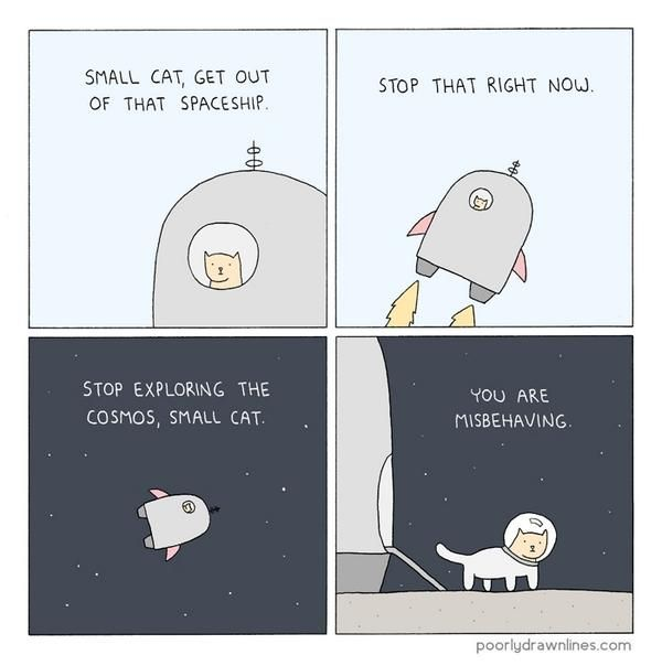 Stop exploring the cosmos, small cat.