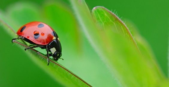 Coltivare un orto domestico e ricorrere a pesticidi significa compromettere le migliori ragioni per dedicarsi ad esso in modo realmente naturale, consistenti nella produzione di alimenti sani e genuini, completamente privi di sostanze potenzialmente pericolose, ed essere attivi nel rispetto dell'ambiente e della fertilità dei terreni in prima persona. Esistono fortunatamente delle alternative efficaci ad insetticidi e pesticidi, a partire dalla possibilità di organizzare il proprio orto…