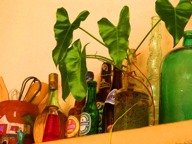 Plant and bottles collection