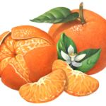 One whole and one peeled Mandarin orange or tangerine and one peeled Mandarin…