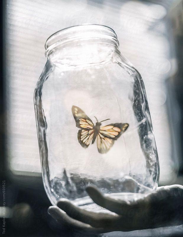 hand holding a jar releasing a monark butterfly