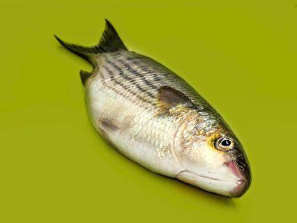 Andrea Pol - Google+ Fresh Fish