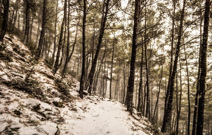Snowy pine forest by Sotis G on 500px Xanthi north Greece