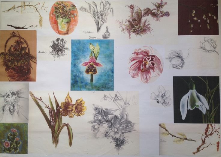 Botanical illustrations various mixed media