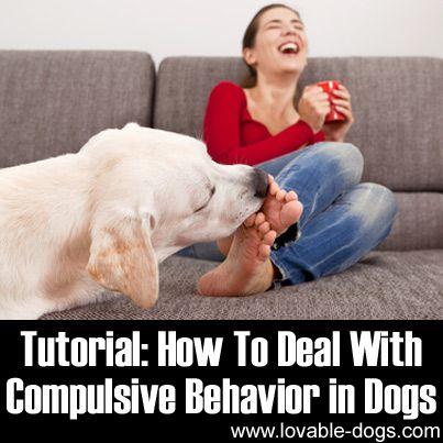 Tutorial: How To Deal With Compulsive Behavior in Dogs ►► http://lovable-dogs.com/tutorial-how-to-deal-with-compulsive-behavior-in-dogs/?i=p