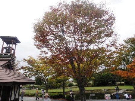 佐賀県鳥栖市に来んね♪-池田下ため池公園
