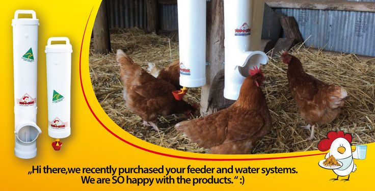 dinea-a-chook-testimonial1.png#chickens feeders #hens #eggs #feeders #homesteading #farmers #drinkers #Townsville #shop #Mealworms #chickens  #PoultryFarming