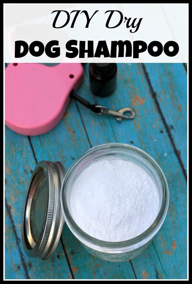 This is a great way to freshen your dog up when you can't give them a full bath.Easy DIY DRY Dog Shampoo!