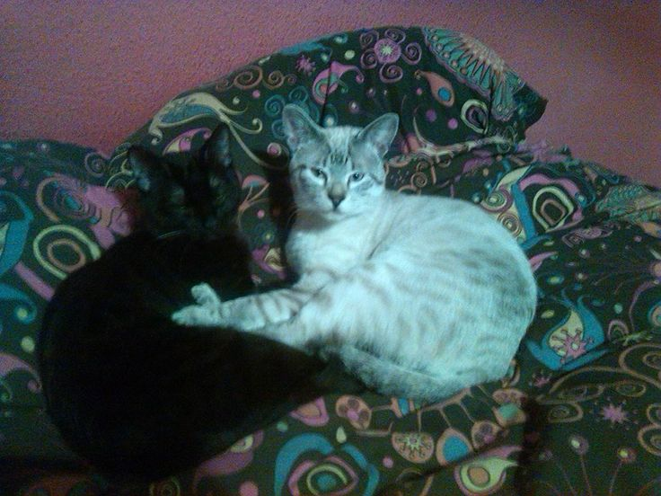 mis #gatos Siesteando