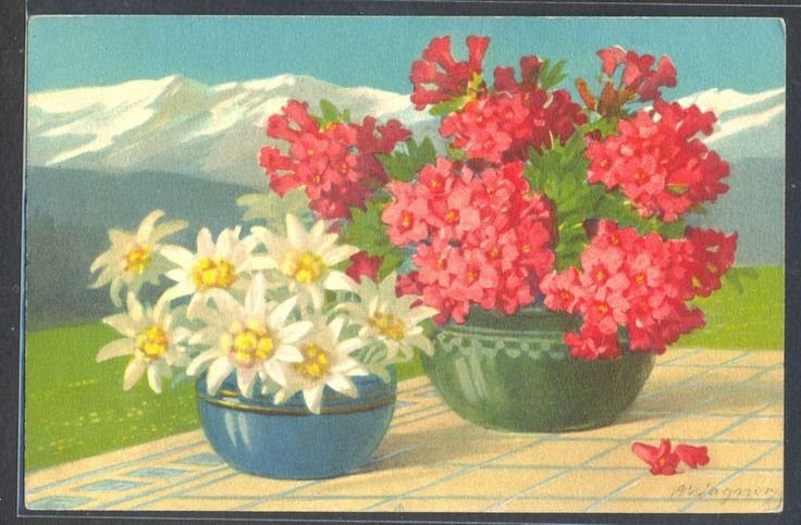 PA056 a/s WAGNER MOUNTAINS FLOWERS PINK FLOWERS & EDELWEISS Fine LITHO