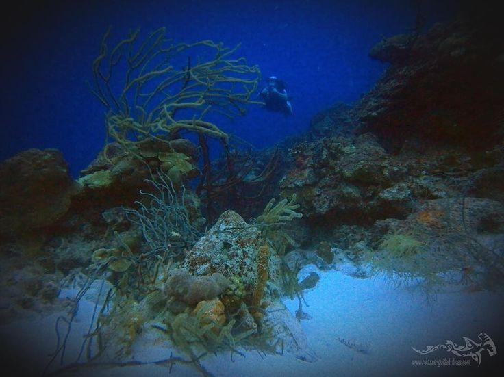 Great reef ...  #scuba #scubadiving #relaxedguideddives #padi #travel #explore #discover #curacao #fun  #duiken #tauchen #diving #tripadvisor #cressi #oceanreef