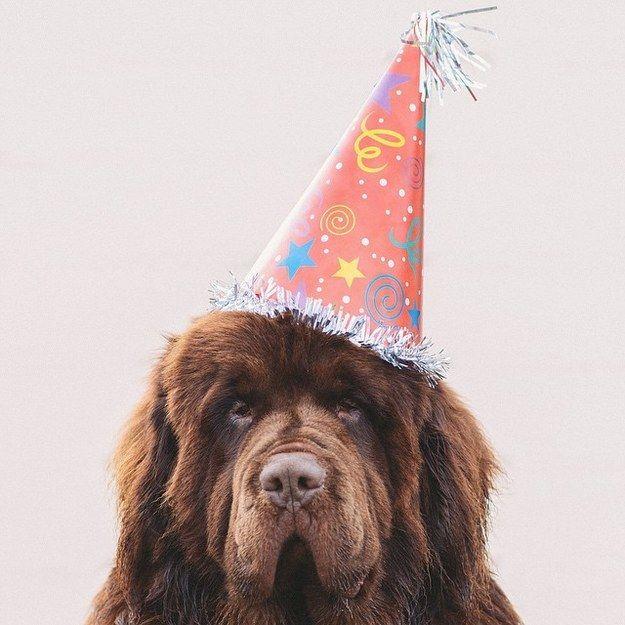 745 Best Animals Images On Pinterest