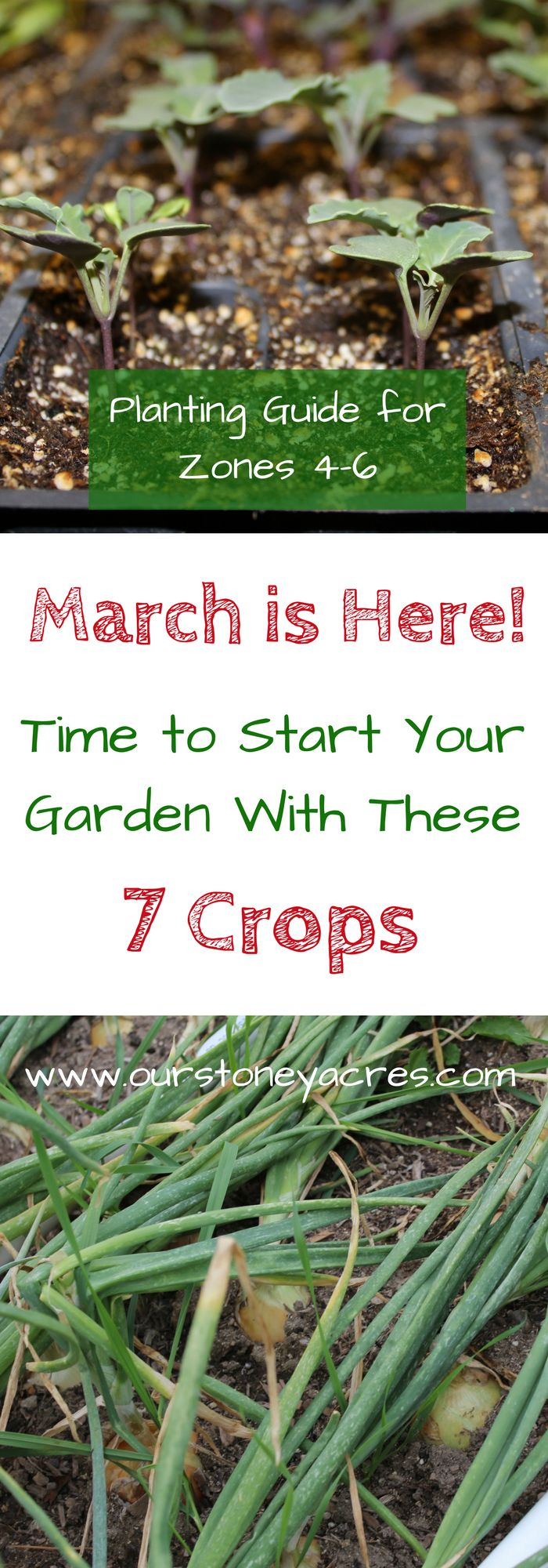 March Planting Guide Zones 4-6.  March has arrived in your garden! This March Planting Guide will give those of you that live in Zones 4-6 a good idea of what seeds can be planted directly in the garden and what seedlings you need to be planting indoors during the month of March!