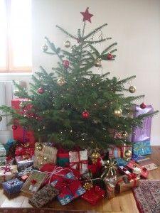 Choose a fresh Christmas tree