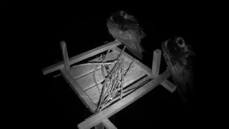 The live eagle cam broadcasts video of baby bald eagles from their nest in Decorah, Iowa. Learn about eagles and watch them hatch, play, eat, & learn to fly.