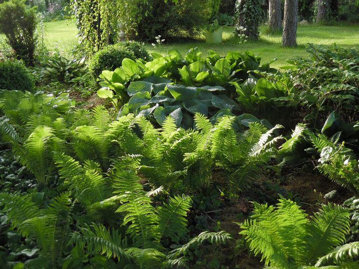 Znalezione obrazy dla zapytania dom w ogrodzie leśnym