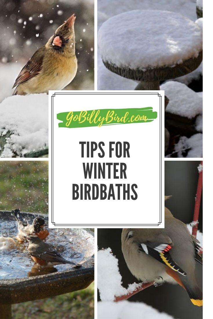 GREAT TIPS ON WINTER BIRDBATHS | Bird bath, Backyard birds ...