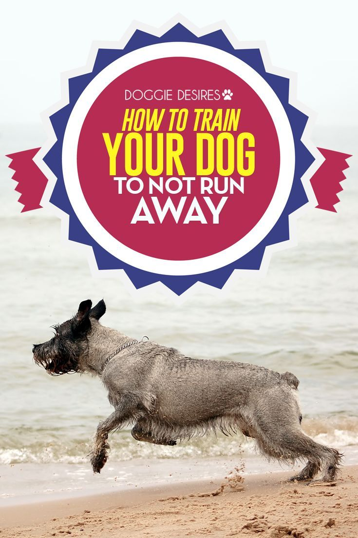How to train your dog to not run away >> http://doggiedesires.com/how-to-train-your-dog-to-not-run-away/