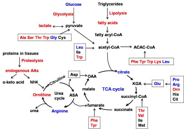 awesome figure (ketogenesis, urea cycle, etc)