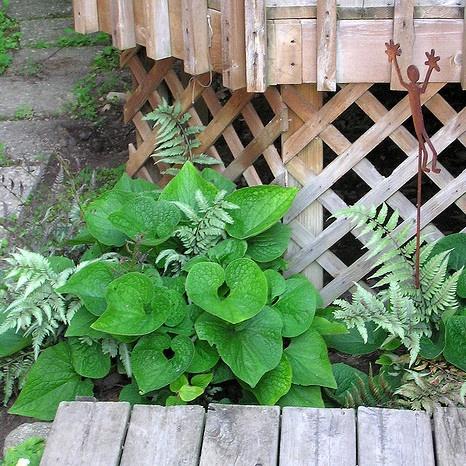 Fotos de jardines peque os jardines pinterest for Jardines pequenos y bellos