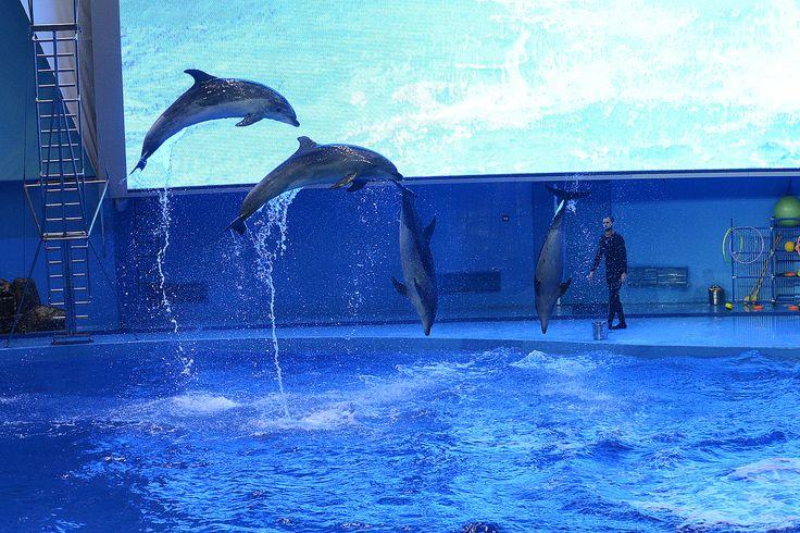 Spectacle aquatique à l'aquarium