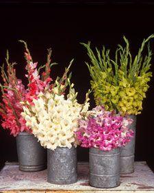 Summer Bulbs - Martha Stewart Home & Garden