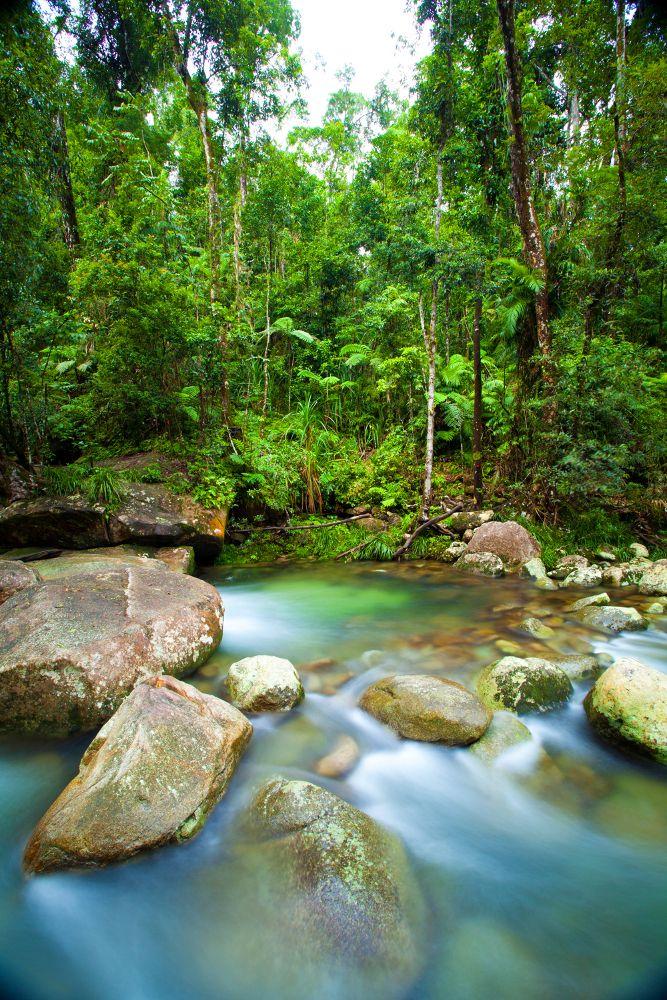 The ultimate road trip through tropical North Queensland! #TNQ #natureandwildlife #rainforest #river #queensland #roadtrip #travel