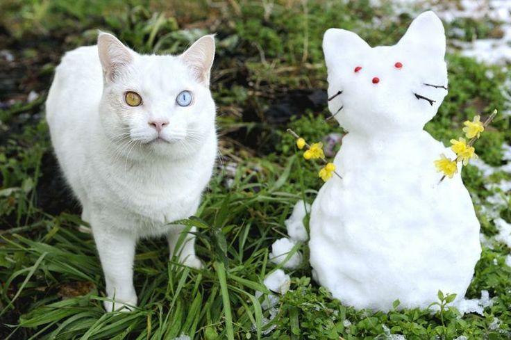 Fukumaru the SnowMeow