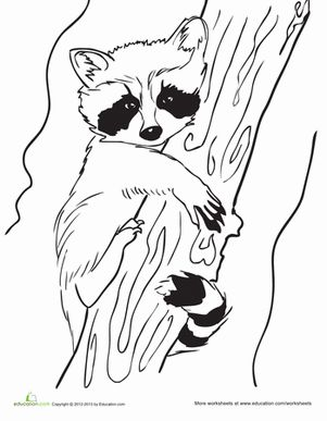 baby raccoon coloring page - Chester Raccoon Coloring Page