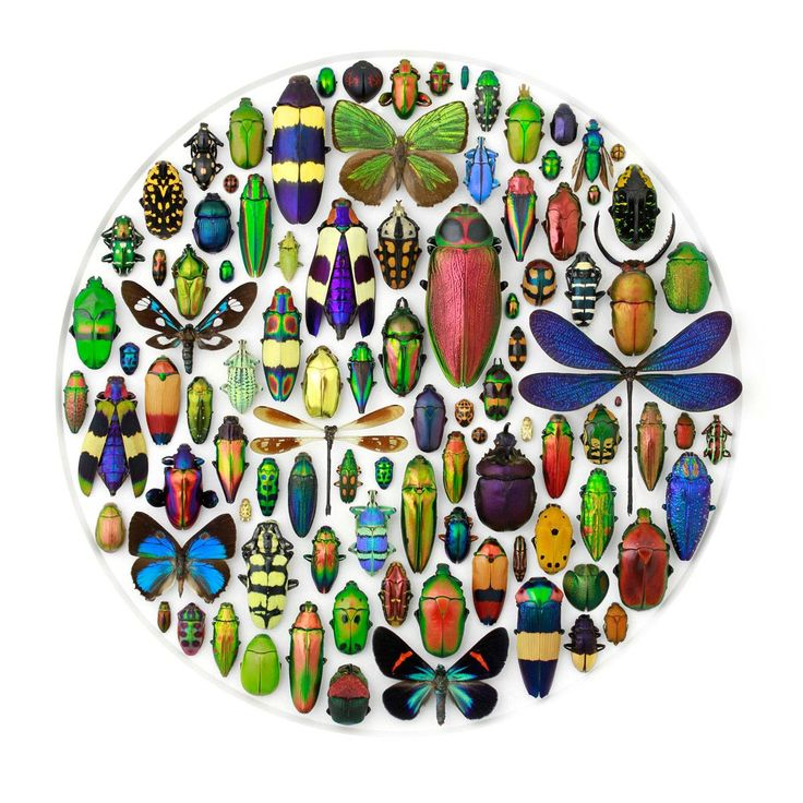 Insects | Pheromone Wholesale