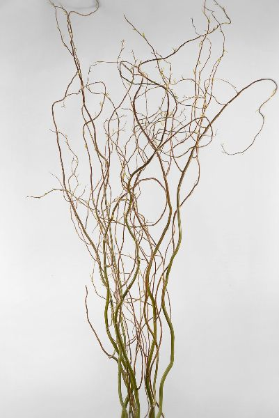 Natural Curly Willow Branches 36-40in (11 branches)