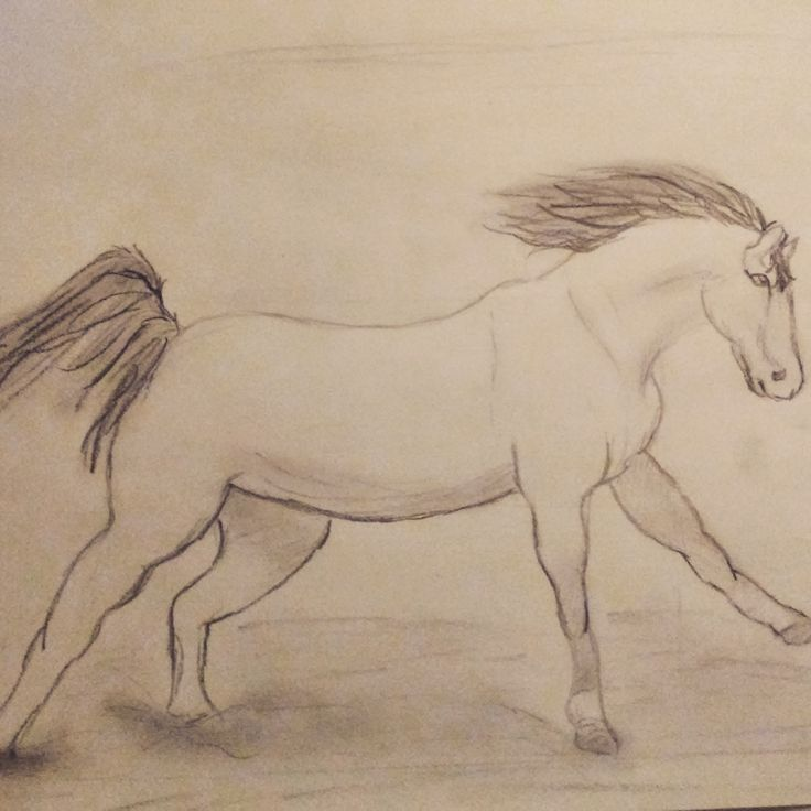 Galopperend paard