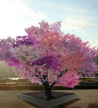 Artist rendering of the Tree of 40 Fruit