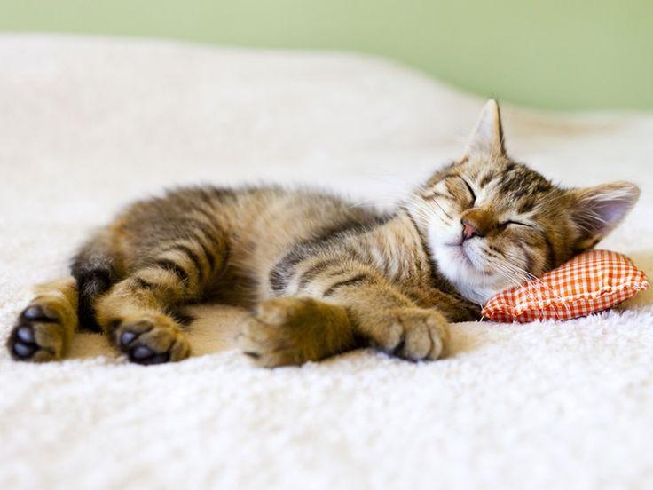 Спокойной ночи картинки животные прикольные