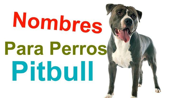 Aqui Nombres Para Perros Pitbull