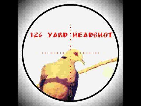 126 Yard Dove headshot with the Daystate Wolverine .22 B
