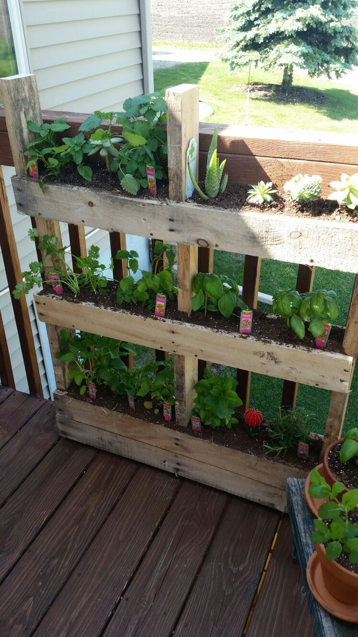 Herb and succulent pallet garden I made today