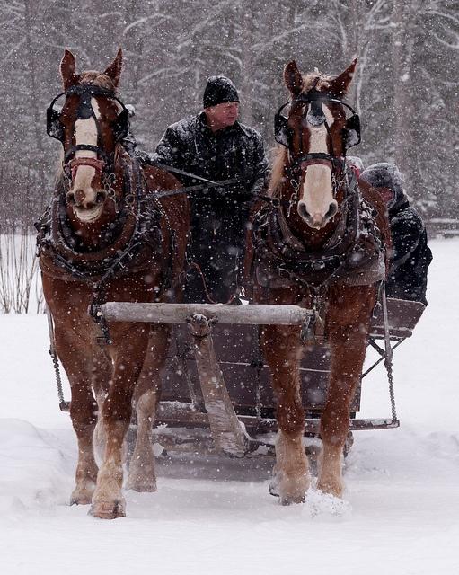 Carriage ride ~ #Ottawa.