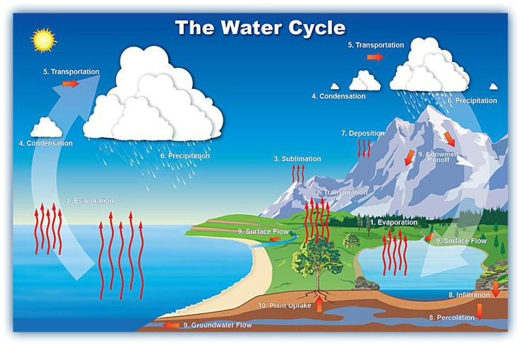 Pin 33: Plants are important in the water cycle. Have a look at the poster. What role do they play in the water cycle?