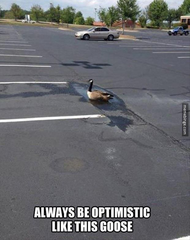 Always be optimistic like this goose!