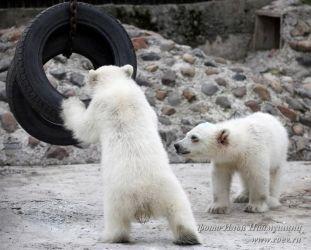 КРАСНОЯРСКИЙ ПАРК ФЛОРЫ И ФАУНЫ «РОЕВ РУЧЕЙ» | «Роев ручей» приютил осиротевших белых медвежат!