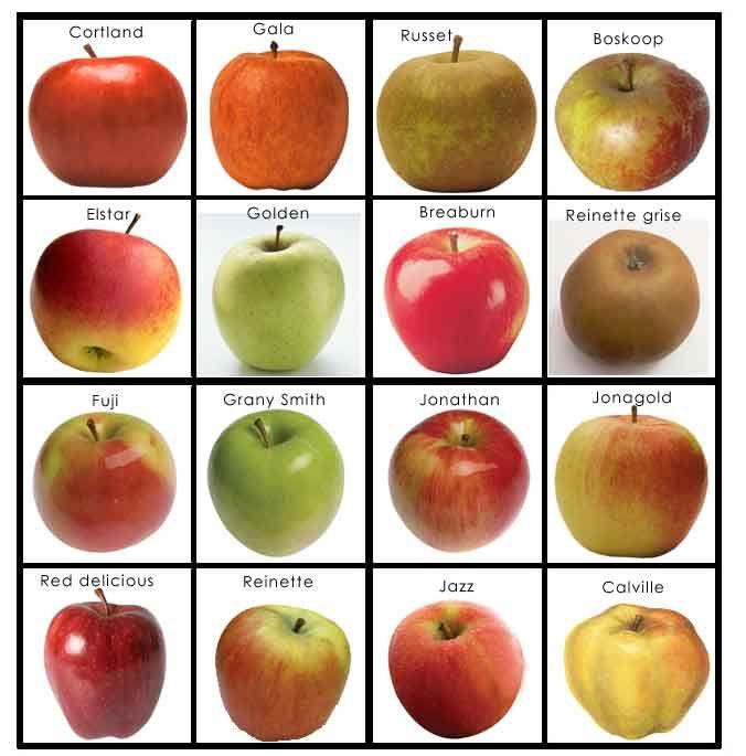 Projet autour de la pomme - Prépalipopette