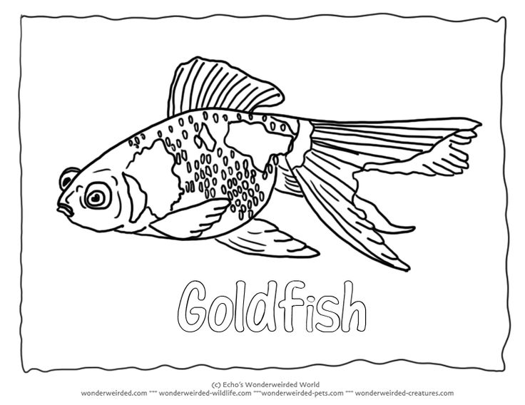 Goldfish Coloring Sheet 1 Picture To Color For Our Fish Pages Collection Black