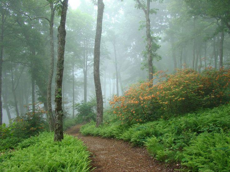 ROMANTIC NATURE TRADITION W. Gary Smith, American garden designer